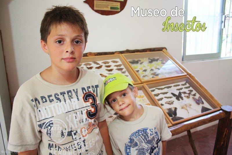 museo-de-insectos