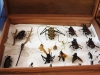 insectos3