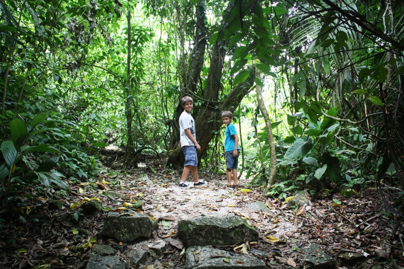 palenque-forest4