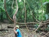 palenque-forest1